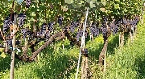 Campings pour visiter les vignobles et les caves