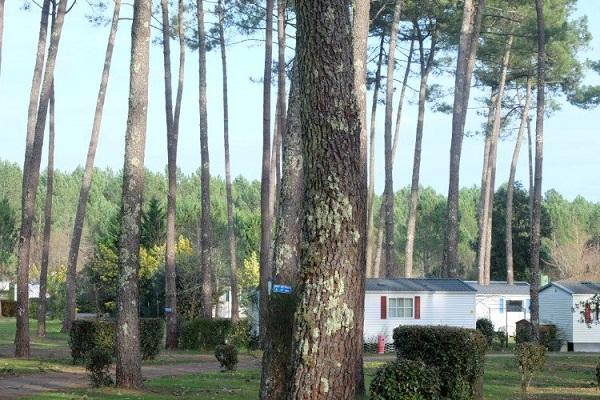 /campings/francia/aquitania/landas/DunesdeContis/camping-les-dunes-de-contis-1553270020-xl.jpg