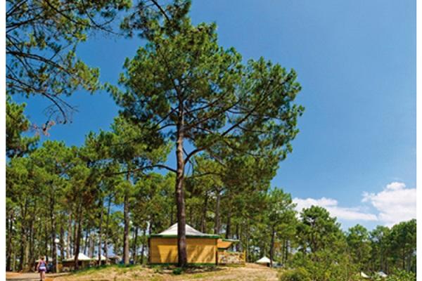 /campings/francia/aquitania/landas/LeVivier/camping-le-vivier-1500908335-xl.jpg
