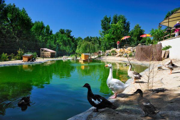 campings/francia/languedoc-rosellon/herault/DomainelaYole/domaine-la-yole-wine-resort-la-ferme-valras-plage-animaux-3.JPG