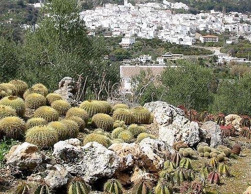 Informaci n tur stica de jard n bot nico de cactus for Jardin botanico numero telefonico