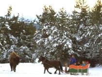 Réserve de bisons de Ste. Eulalie