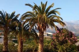 Camping Fonts de l'Algar, Callosa d'en Sarria (Valencia)