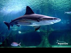 Aquarium de Roquetas