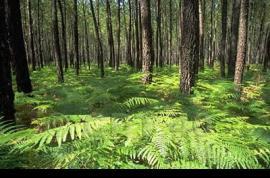 Parque Natural Regional de Landes de Gascogne