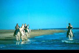 Ridinf through the Camargue