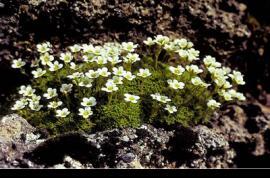 El Parque Nacional de los Cevennes ocupa buena…