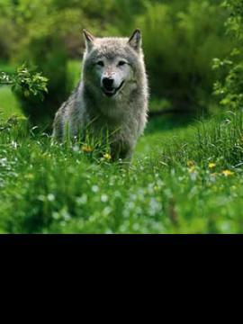 Parc des Loups de Sainte Lucie