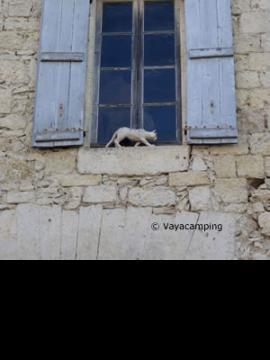 Los gatos de La Romieu